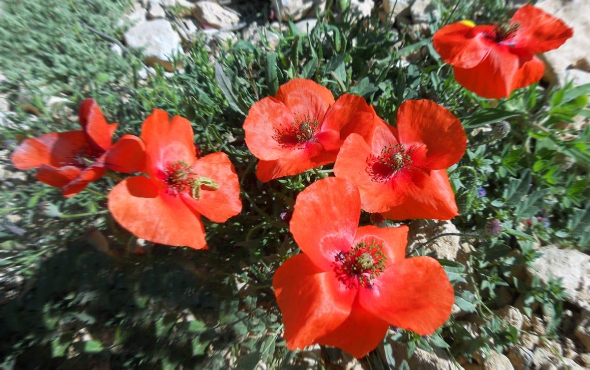 la-primavera-la-sangre-altera