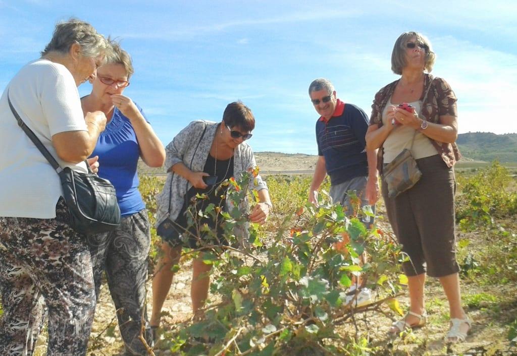 Recorrido y visita a los viñedos de Viña Elena, muy cerca de Murcia.