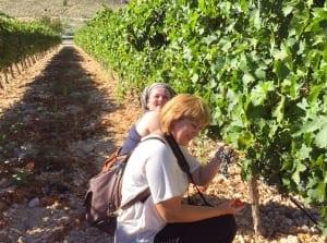 Visita en los viñedos de la Bodega